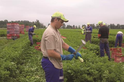 EU migrant workers on Lancashire farm