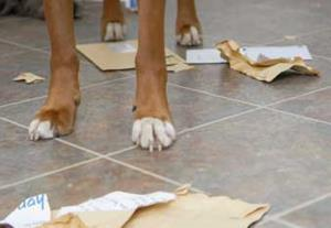 Dog eats file