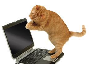 Kitten obiter